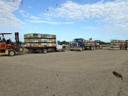 Ferry bees to airstrip