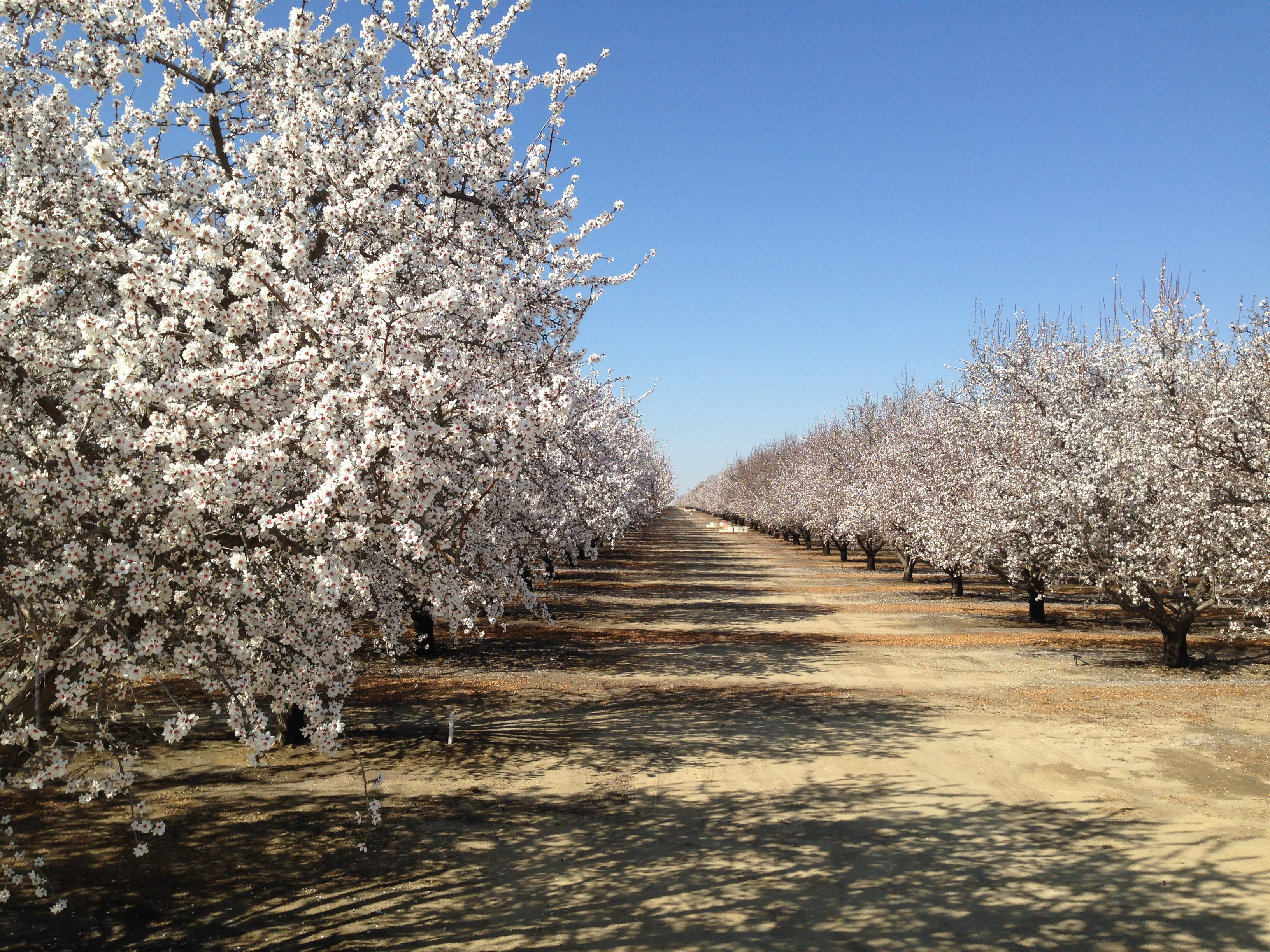 Wonderful Orchards in Bloom