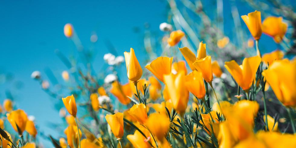 Sing-Nachmittag (Frühlingsedition)