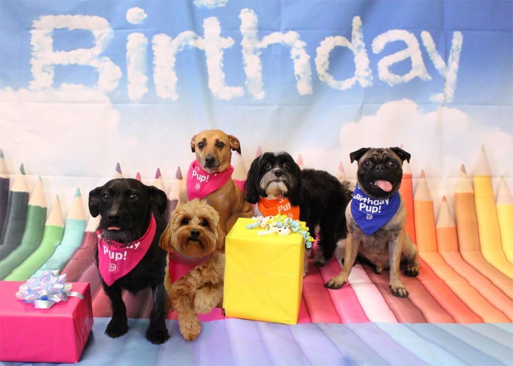 Doggie Birthday Party @ Dogtopia