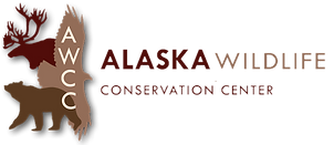 awcclogo-whiteshadow-1.png