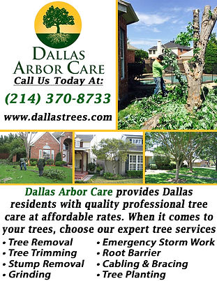 Dallas Arbor Care.jpg