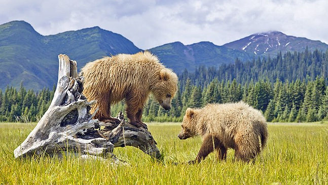 us-alaska-denali-national-park.jpg