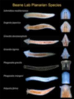 Multi-Species.jpg
