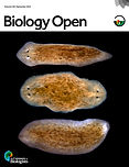 Beane2016--Biology Open Cover - Levin.jp