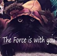 Force Card.jpg