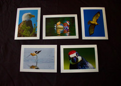 These are five examples of our greeting cards