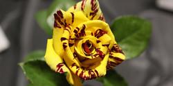 Alakazam (Miniflora)