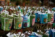 bareroot-roses2.jpg