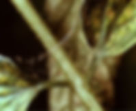 SpiderMites2.jpg