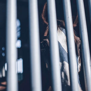 Breaking the Bars of Your Own Cage