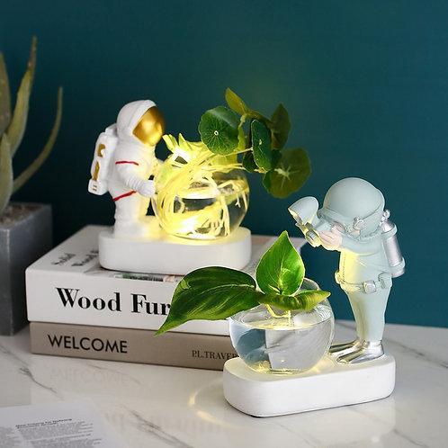Decorative Air Plants / Succulents Planters