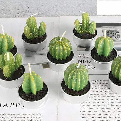 Sahara Succulent Candle Set