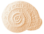 snail logo - small.png