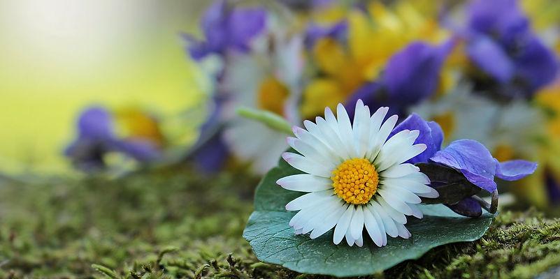 wildflowers-2184407_1920.jpg