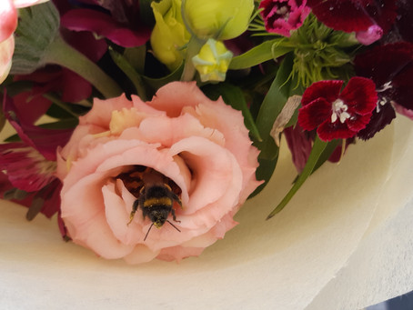 The Story Of Wilbur (The Loveable Bee)