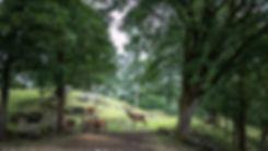 AW4I5201 LITEN.jpg