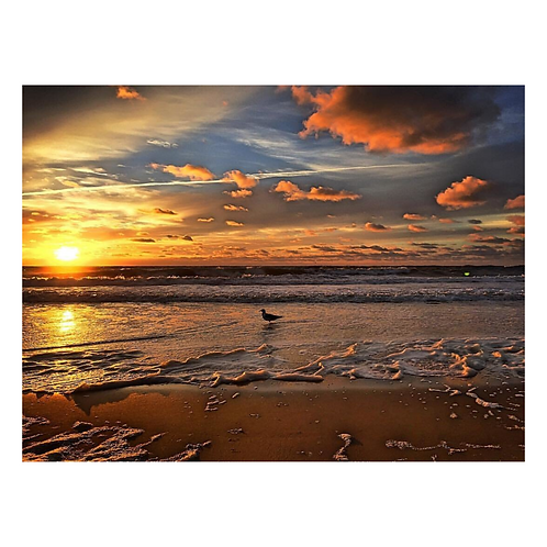 Cutting Board - Sunrise Seagull