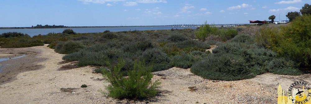 Marismas de Huelva (Andalucía). España