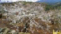 Excursión al Valle del Jerte