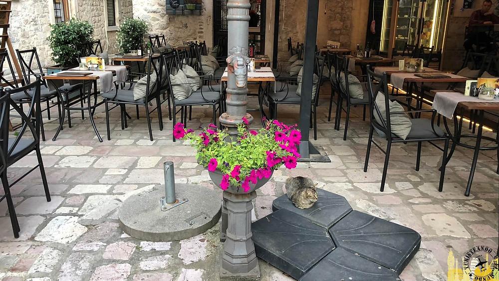 Kotor (Montenegro). Gato