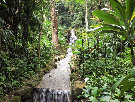 El jardín botánico de Río de Janeiro (UNESCO). Brasil