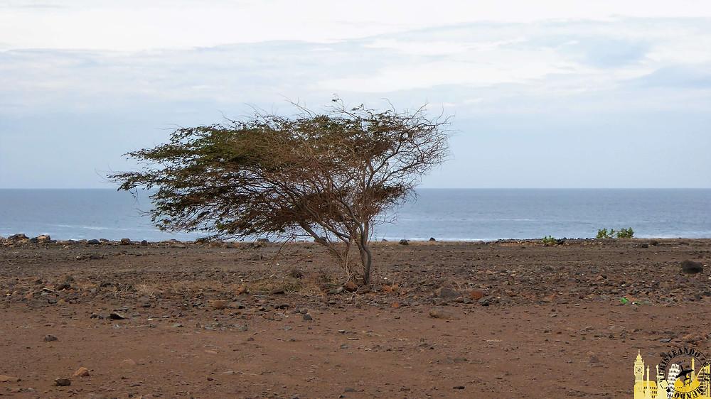 Isla de la Sal (Cabo Verde)
