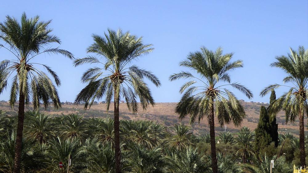 Yacimiento Arqueológico de Cafarnaúm, Israel