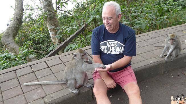 Paco con los monos