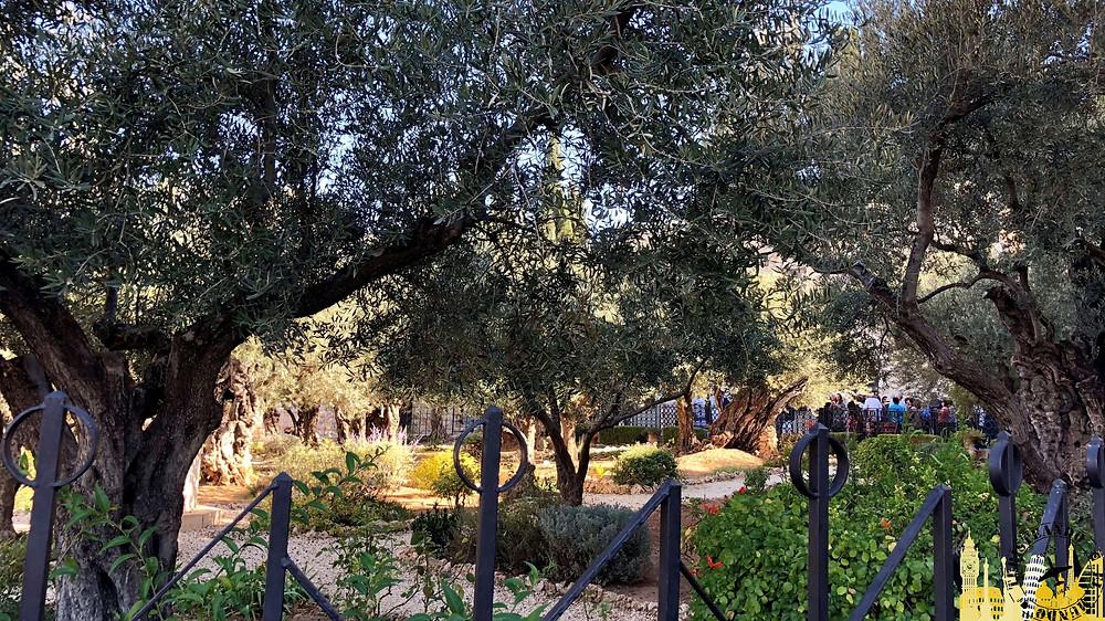 Jerusalén. Huerto Getsemaní