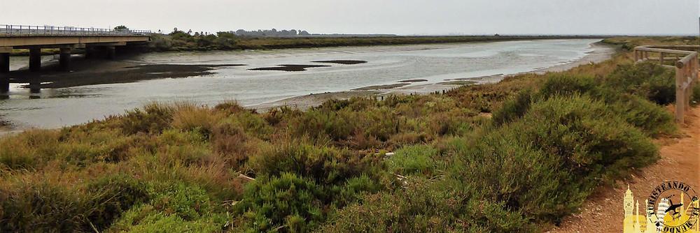 Marismas del Odiel (Huelva). España