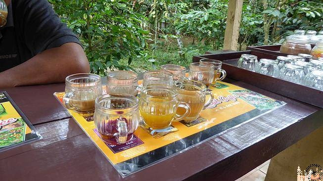 Degustación café Luwak y Tés