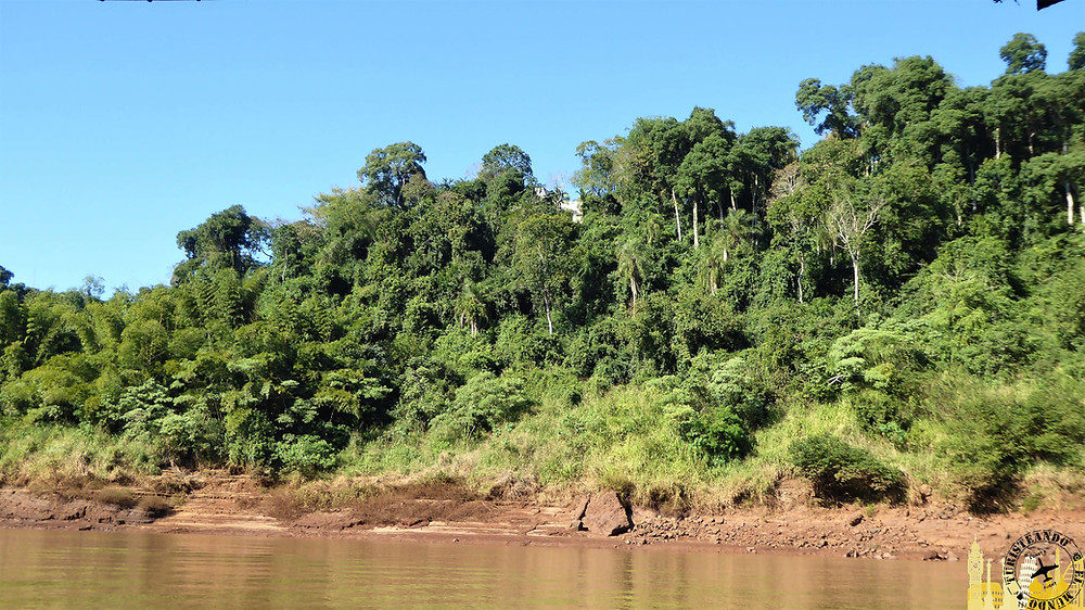 Selva Iryapu. Puerto Iguazú (Argentina)