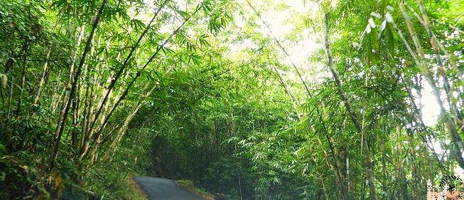 Bosque bambú (Bali)