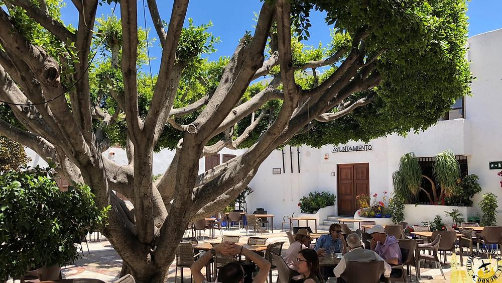 Árbol centenario de Mojácar (Almería). España