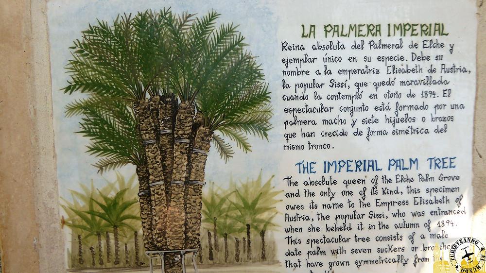 Palmeral de Elche (España)