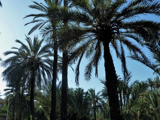 Elche y su Palmeral (UNESCO). Comunidad Valenciana (España)