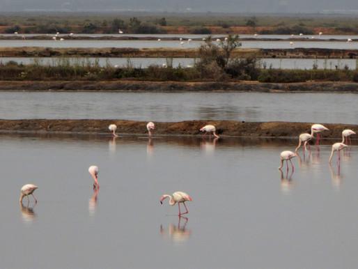Las marismas del Odiel, Reserva de la Biosfera (UNESCO). Andalucía (España)