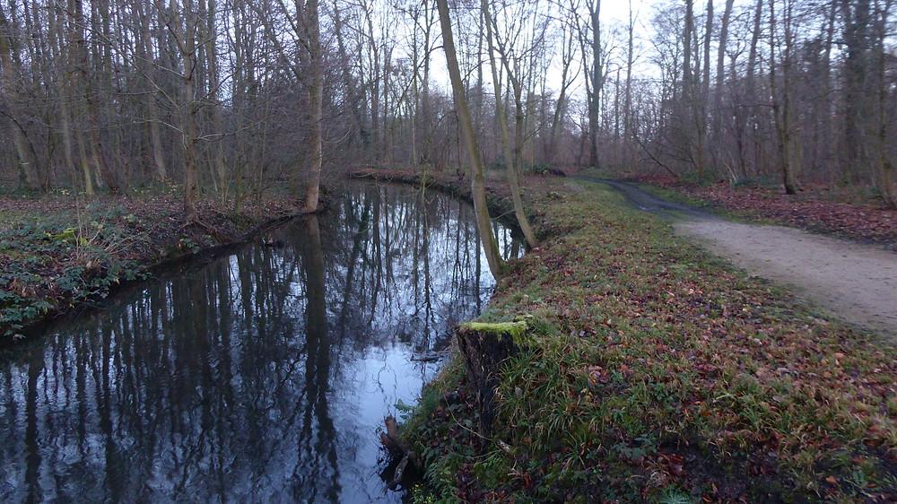 Bosque palacios Brühl