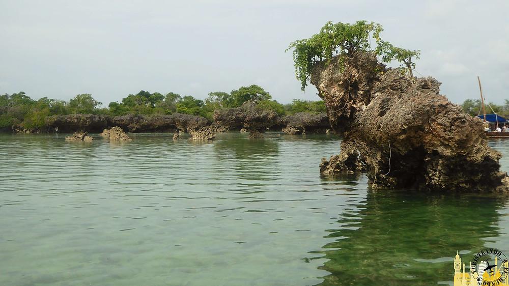 Laguna manglares isla de Kwale