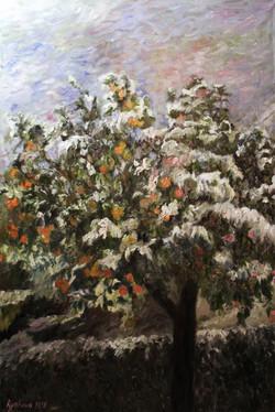 Апельсины_Зимой