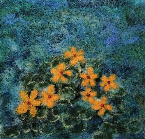 Marsh Marigolds (Caltha Palustris)-- Linda Jensen