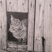 Kitten in Shed-Jack Jensen