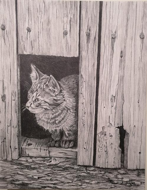 Kitten in Shed - Jack Jensen