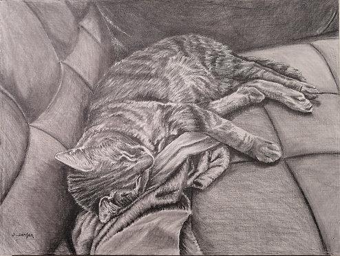 Catnap-   Jack Jensen