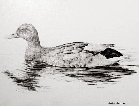Mallard-Jack Jensen
