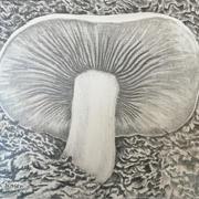 Mushroom (graphite)-Jack Jensen