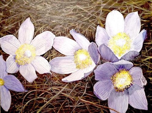 First Sign of Spring-Linda Jensen