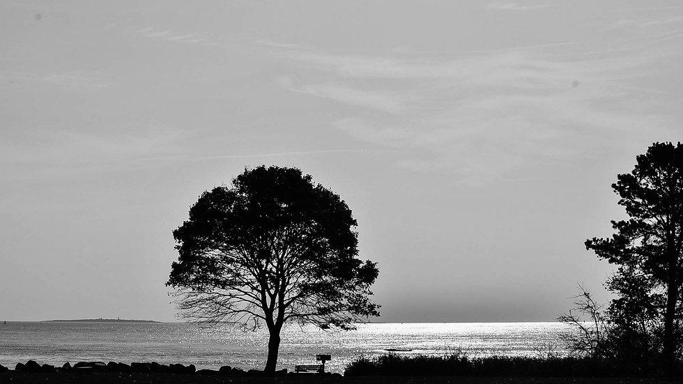Black & White Tree