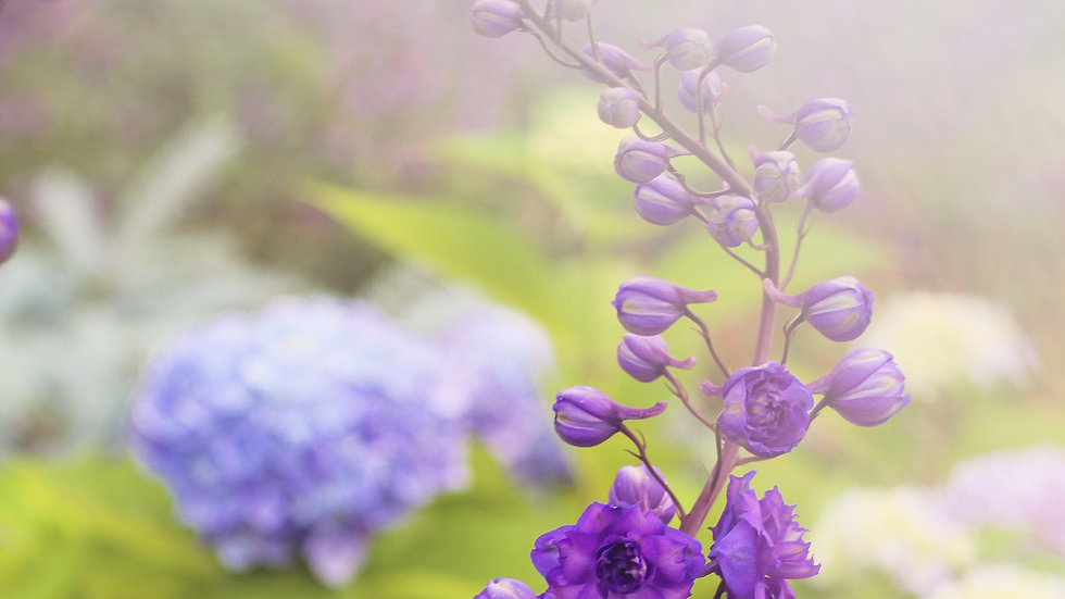Purple flowers in the fog note cards